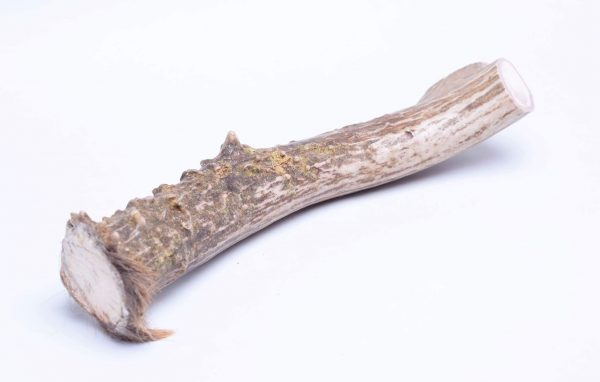 10″-12″ X-Large Antler dog chew (1/bag)